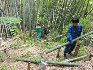 竹伐り倒し